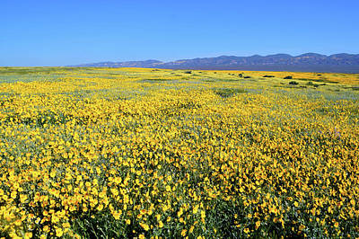 Photograph - Carrizo Plains Goldfields by Floyd Snyder