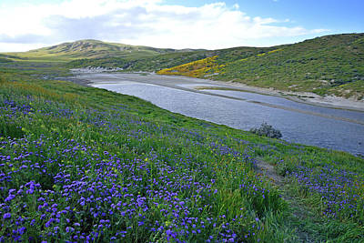 Carrizo Pond And Wildflowers Art Print