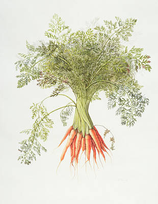 Vegetables Drawing - Carrots by Margaret Ann Eden