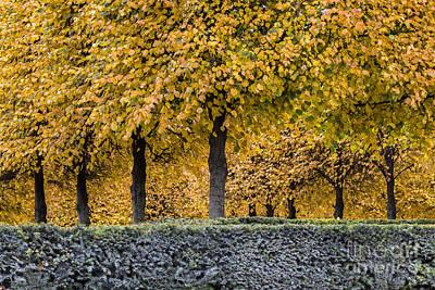 Photograph - Carrousel Garden by Hitendra SINKAR