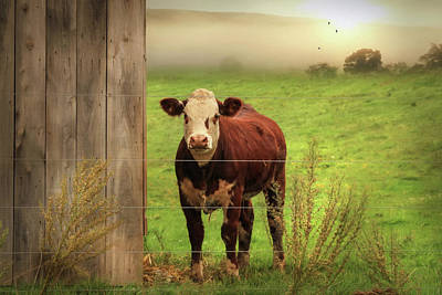 Morning Light Digital Art - Carsonville Cow 1 by Lori Deiter