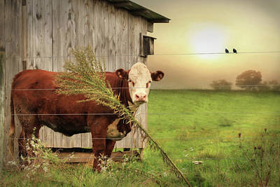 Morning Light Digital Art - Carsonville Cow 2 by Lori Deiter