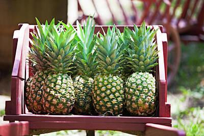 Cart Of Pineapples Print by Walt Stoneburner