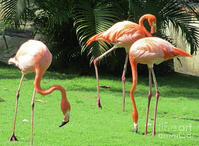 Photograph - Cartagena Flamingos 3 by Randall Weidner