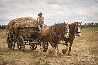 Photograph - Carting Hay by Linda Lees