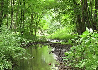 Photograph - Carver Creek by Kimberly Mackowski