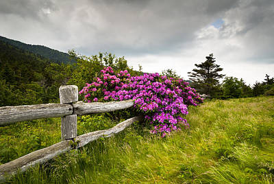 Rhododendron Photograph - Carvers Gap Roan Mountain State Park Highlands Tn Nc by Dave Allen