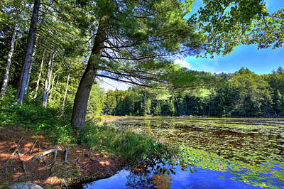 Photograph - Cary Lake In August by David Patterson