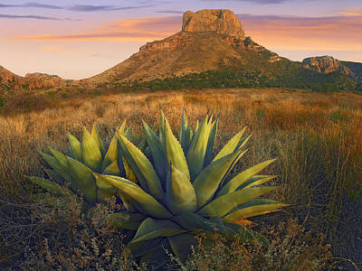 Casa Grande Photograph - Casa Grande Butte With Agave by Tim Fitzharris