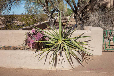 Photograph - Casa Grande Ruins Flower Bed by Edward Peterson