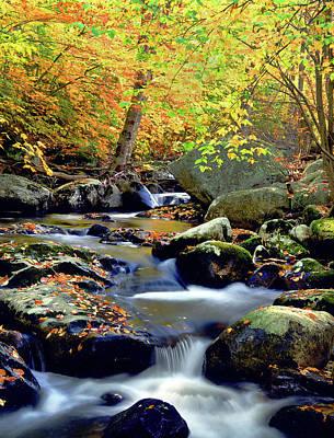Photograph - Cascade Brook by Frank Houck