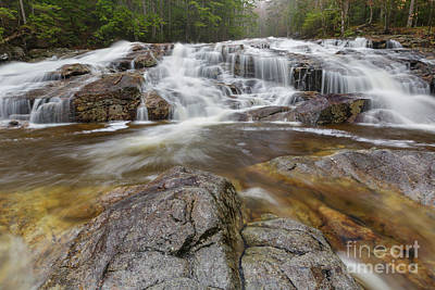 Photograph - Cascade Brook - Lincoln New Hampshire by Erin Paul Donovan