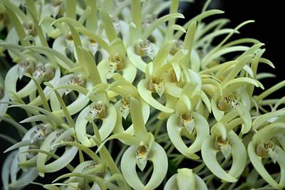Photograph - Cascade Of Orchids by Amanda Vouglas