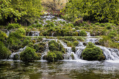 Photograph - Cascade Springs Utah by Richard Lynch