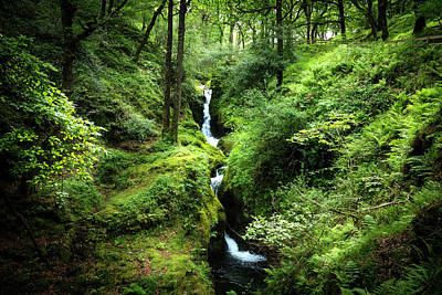 Photograph - Cascades In The Forest Of Glendalough by Debra and Dave Vanderlaan