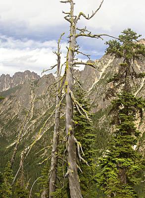 Cascades Tree Art Print