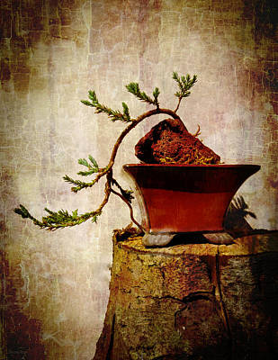 Photograph - Cascading Bonsai In Training  by Shawna Rowe
