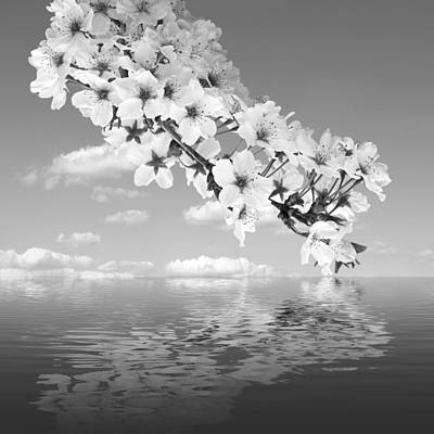 Photograph - Cascading Cherry Blossom In Black And White by Gill Billington