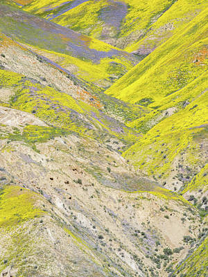 Photograph - Cascading Colors by Alexander Kunz
