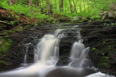 Photograph - Cascading Forest Stream by John Burk