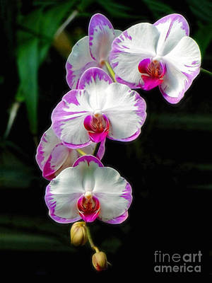 Photograph - Cascading Orchid Beauties by Sue Melvin