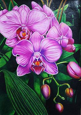 Macro Drawing - Cascading Orchids by Bruce Bley
