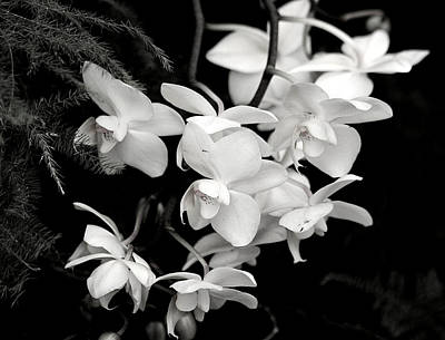 Photograph - Cascading Orchids In Black And White by Sheila Brown