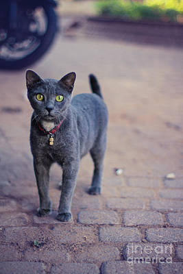 Photograph - Case Of The Curious Cat by Alex Greenshpun