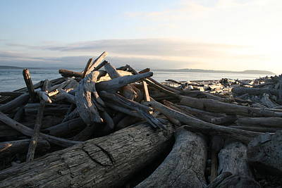 Photograph - Casey Driftwood by Dylan Punke