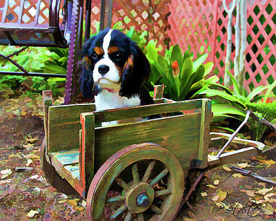 Puppy Digital Art - Casey In The Cart by Patricia Stalter