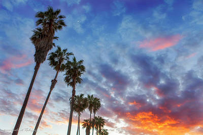 Photograph - Casitas Palms by John A Rodriguez