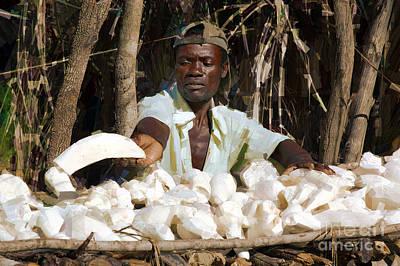 Cassava Root Original