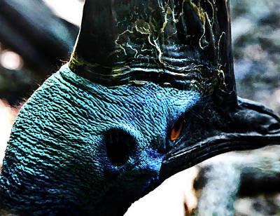 Photograph - Cassowary Blues by Miroslava Jurcik