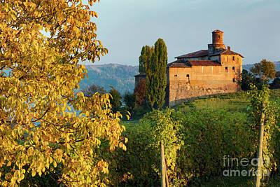 Grapevine Photograph - Castello Della Volta - Barolo II by Brian Jannsen
