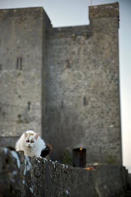Photograph - Castle Cat by Lawrence Boothby