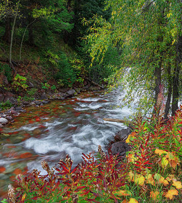 Art Print featuring the photograph Castle Creek Beauty by Tim Reaves