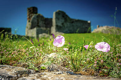Photograph - Castle Flowers by Andrew Matwijec