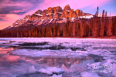Photograph - Castle Mountain Pink Paradise by Adam Jewell
