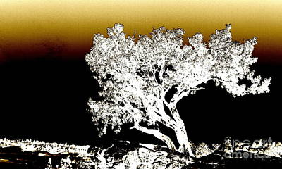 Photograph - Castlewood Canyon Tree - Modern by Christine S Zipps