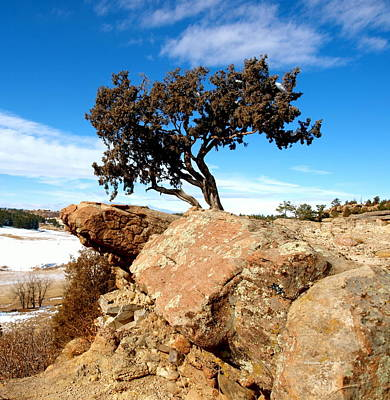 Photograph - Castlewood Canyon Tree  by Christine S Zipps