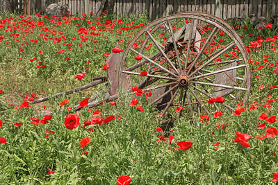 Photograph - Castro Poppies And Old Wagon 2 by Teresa Wilson