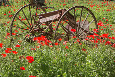 Photograph - Castro Poppies And Old Wagon by Teresa Wilson