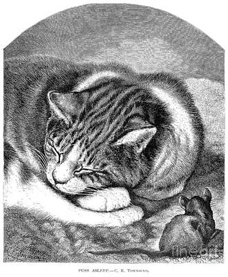 Photograph - Cat & Mouse by Granger