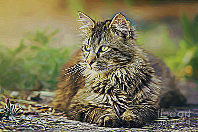 Photograph - Cat 18818 by Ray Shrewsberry