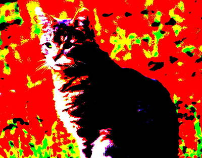 Photograph - Cat 2 by Jean Evans