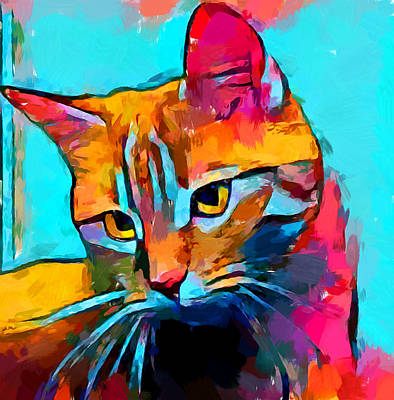 Royalty-Free and Rights-Managed Images - Cat 6 by Chris Butler