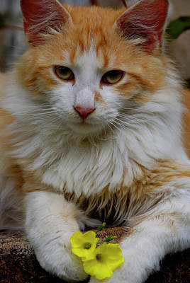 Cat Photograph - Cat 7 by Jane James