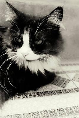 Focus On Foreground Digital Art - Cat by Adam Csaba Szegvari