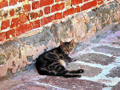 Photograph - Cat Against Stone by Susan Savad