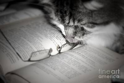 Photograph - Cat And Book by Mary-Lee Sanders